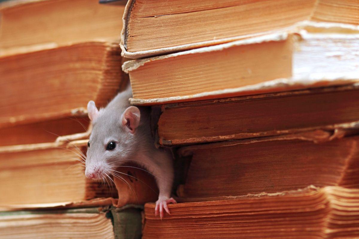 Souris Grimpe Au Mur quelles sont les bonnes méthodes pour faire fuir les souris ?