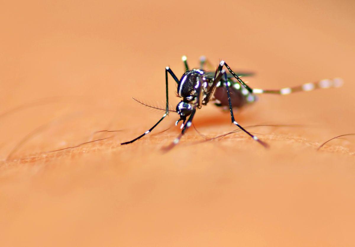 Huile Essentielle Efficace Contre Les Cafards les meilleures méthodes pour lutter contre les moustiques